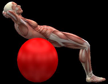 exercise-ball-2277451_1920