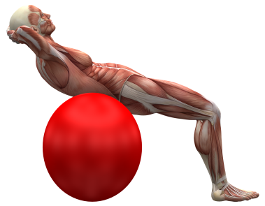 exercise-ball-2277451_1920