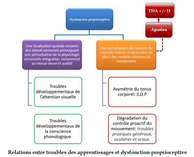relation troubles des apprentissages et dysfonction proprioceptive