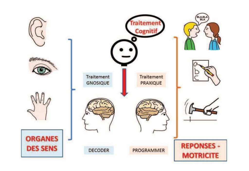 proprioception dans Neurosciences