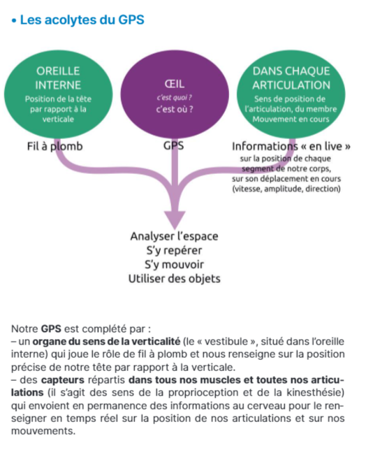 SDP/dysproprioception dans Neurovision